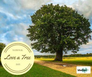 Celebrate a tree